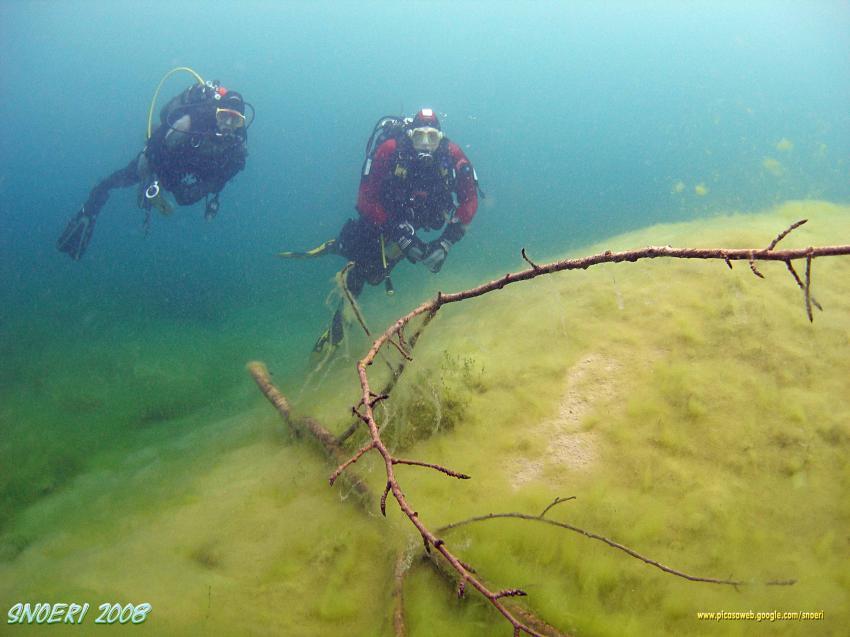 Sinninger See, Sinninger See,Bayern,Deutschland,ast,taucher,schlamm,sicht