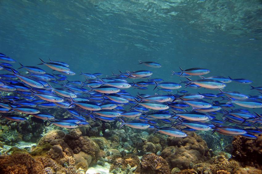Hausriff Selayar Dive Resort, Selayar - Dive -Resort,Indonesien
