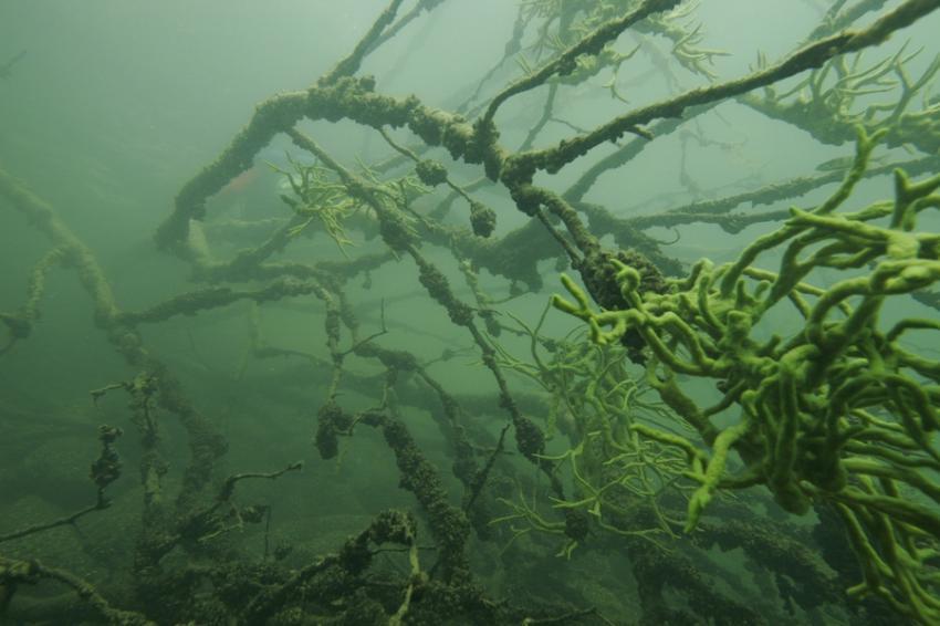 schmaler Luzin, Schmaler Luzin,Feldberger Seenplatte,Mecklenburg-Vorpommern,Deutschland