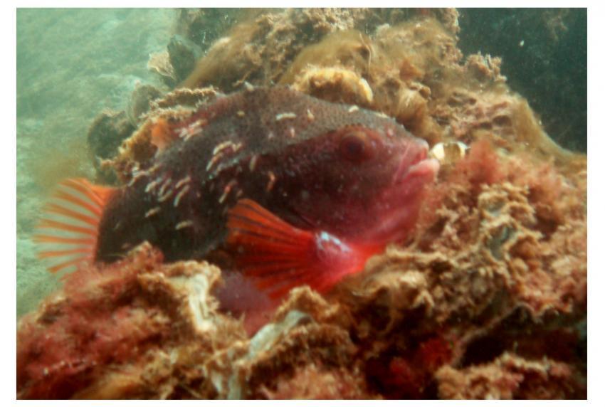 Scharendijke, Koepeltje (Grevelingen), Scharendijke,Grevelinger Meer,Niederlande