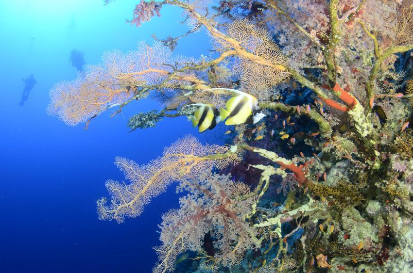 Scuba World Divers Marsa Alam_5, Tauchen in Marsa Alam, Scuba World Divers Marsa Alam, Lagoon View Resort, Ägypten, El Quseir bis Port Ghalib