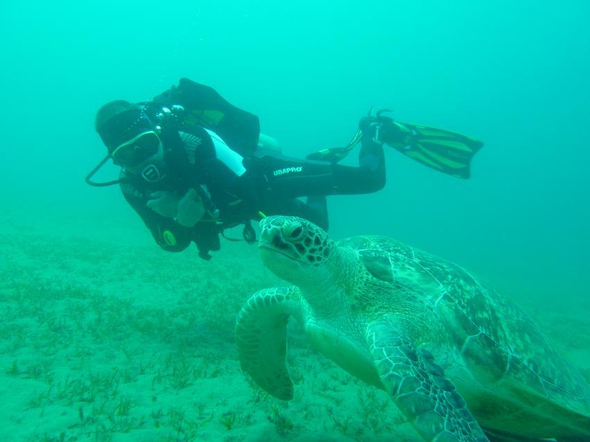 Schildkröte hautnah, Wonderful Dive, Akassia LTI & Calimera, Ägypten, El Quseir bis Port Ghalib