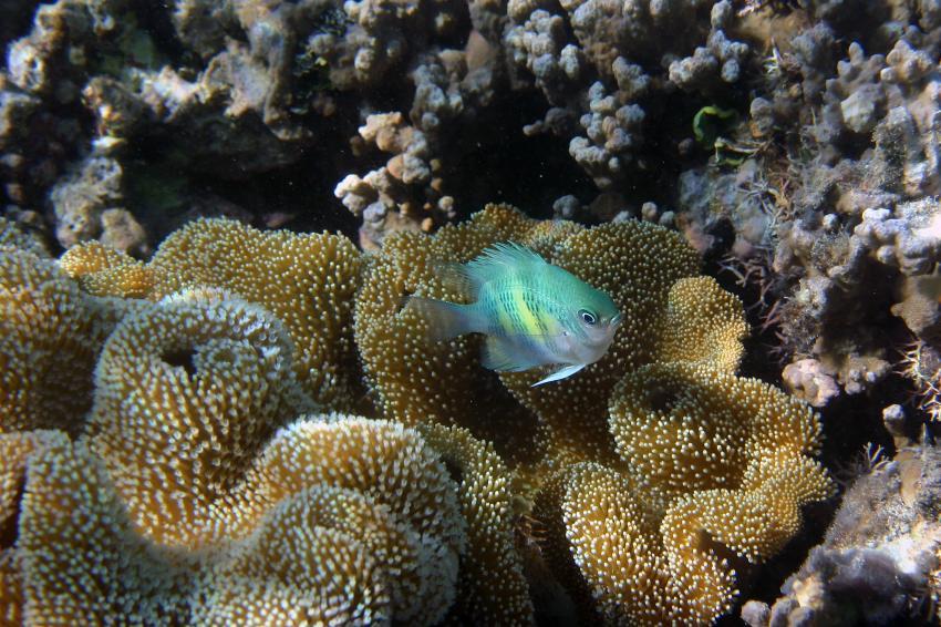 Yasawas/Nanuya Island, Yasawas,Naviti,Fidschi