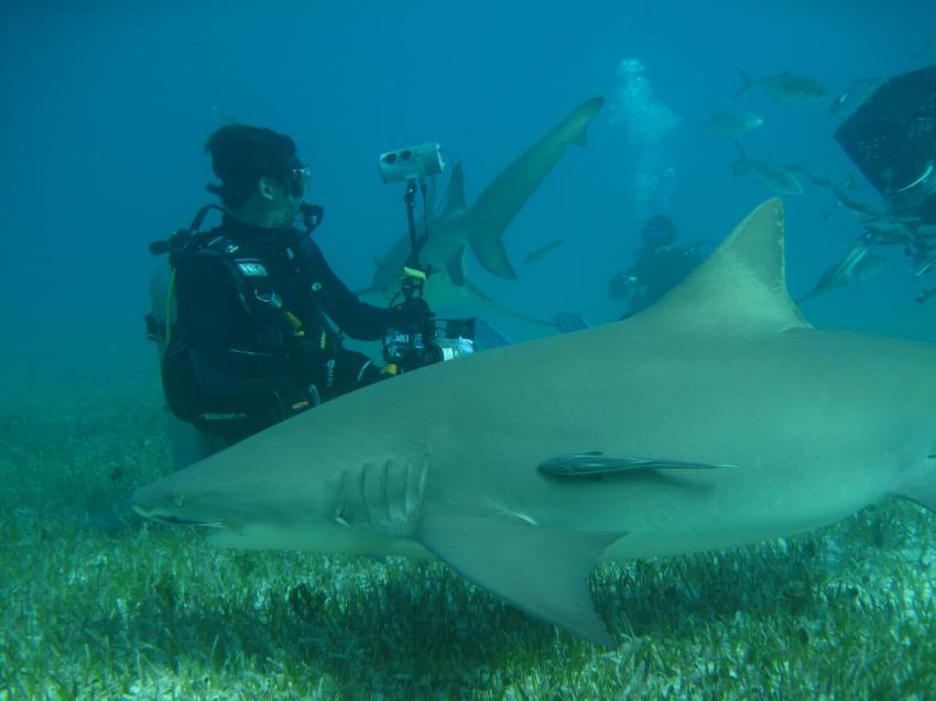 Sharks, Tiger Beach,Bahamas,Hai,Tigerhai,Taucher,dicht