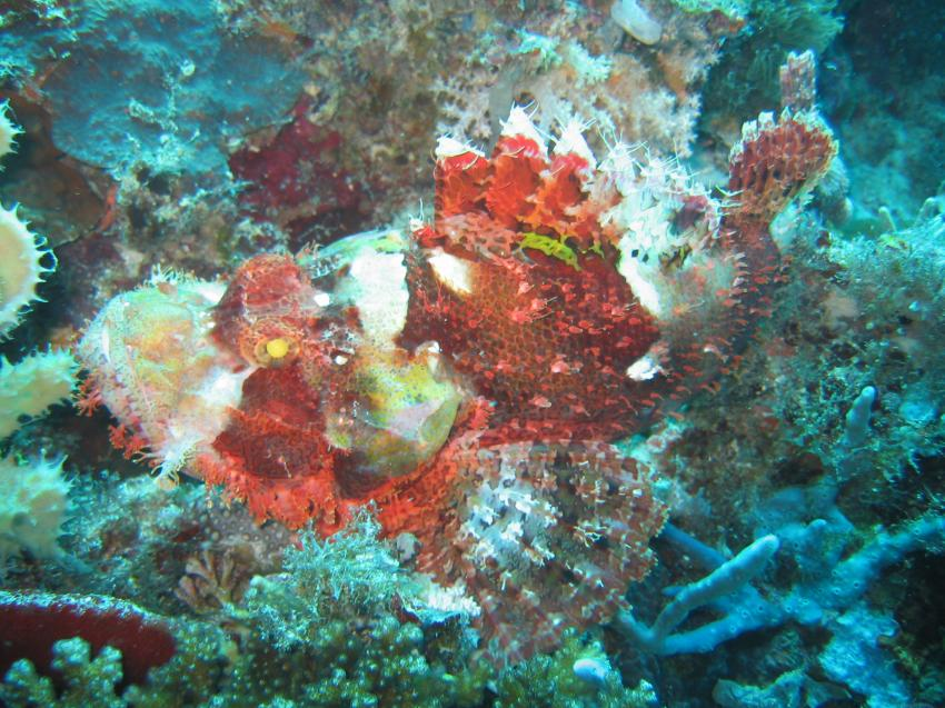 Mactan, Mactan Island,Samal Island,Philippinen