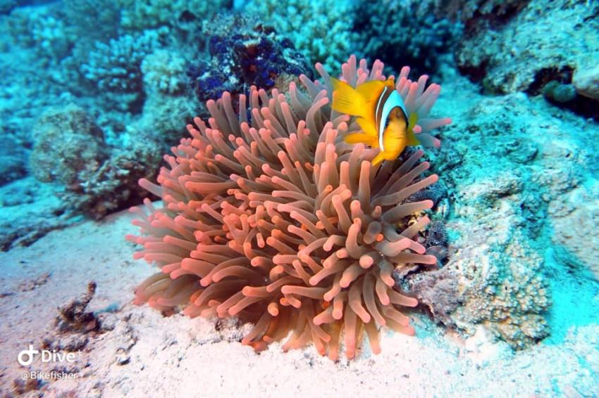 MY Red Sea Explorer - Extra Divers , Ägypten
