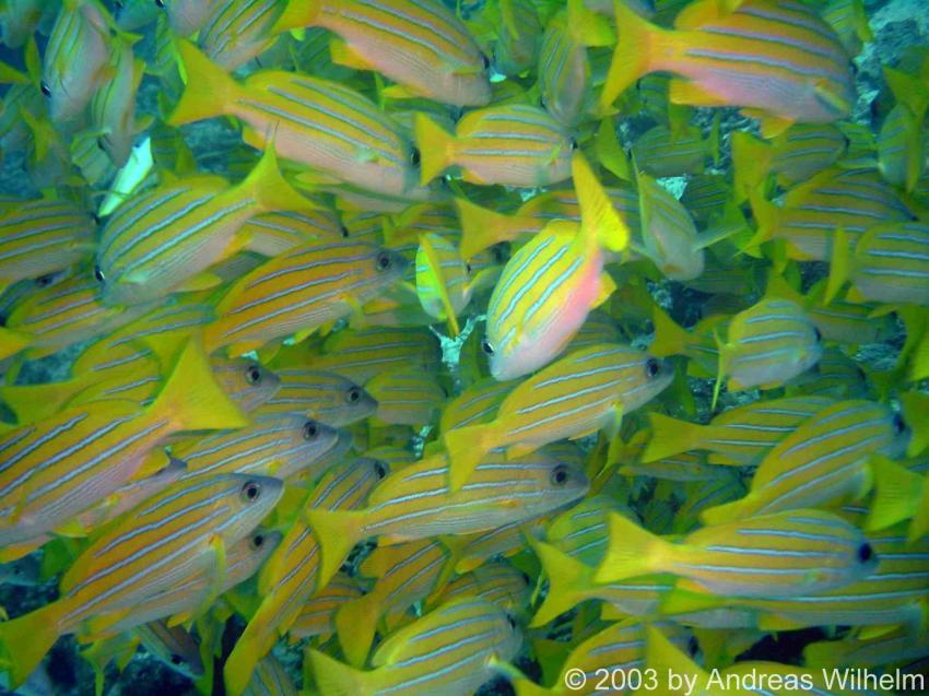 Bandos Hausriff (Nord Male Atoll), Bandos,Malediven