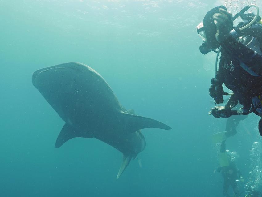 Pro Divers, Vakarufalhi, Malediven