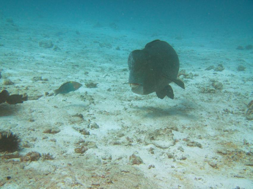 Octopus Diving, Praslin, Seychellen