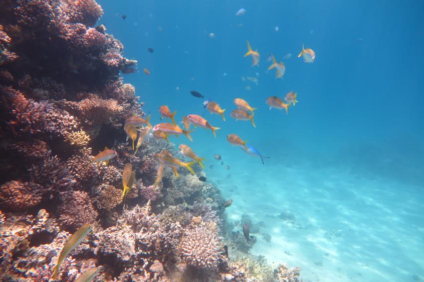 Scuba World Divers_Makadi Bay_Hausriff_6, Tauchen in der Makadi Bay, Scuba World Divers Makadi Bay, Ägypten, Hurghada