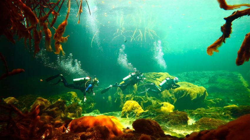 Casa Cenote, Planet Scuba Mexico Höhlentauchen Cenoten, Casa Cenote, Mexiko