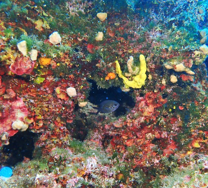 Styria Guenis Diving Center, DIE Tauchbasis auf der Insel Krk, Styria Guenis Diving Center - DIE Tauchbasis auf der Insel Krk, Kroatien