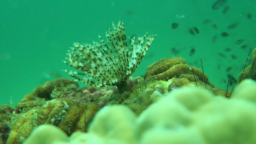 5, Easy Divers, Koh Samui, Thailand, Golf von Thailand