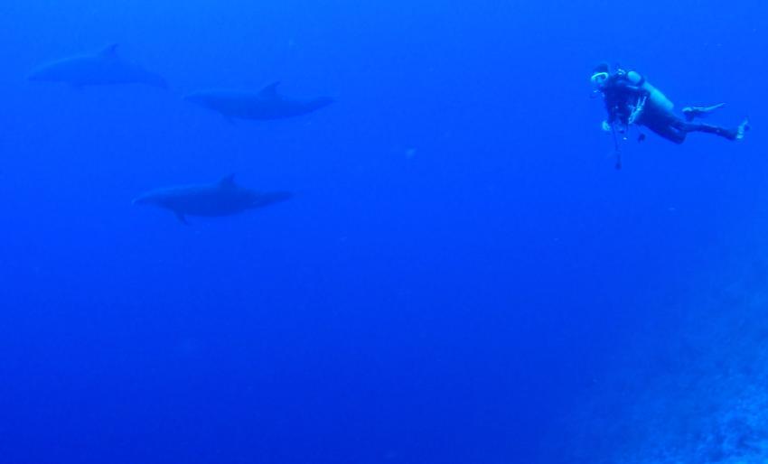 Flashennasendelfine, Elphinstone Riff, Extra Divers - Equinox, Marsa Alam, Ägypten, Marsa Alam und südlich
