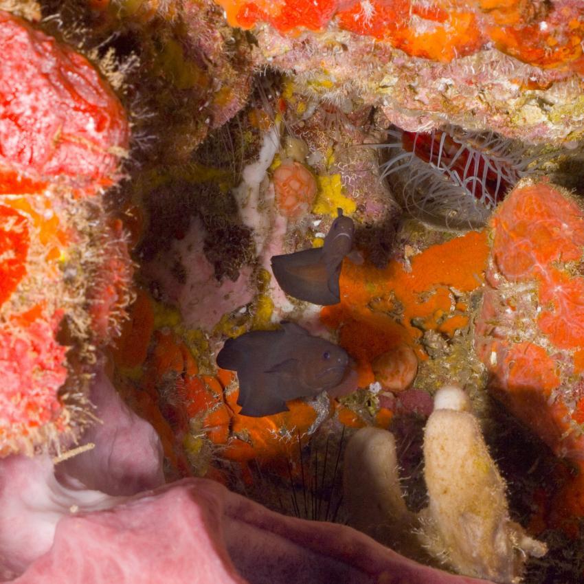 Bequia, Bequia,St. Vincent und die Grenadinen,Höhlenfische