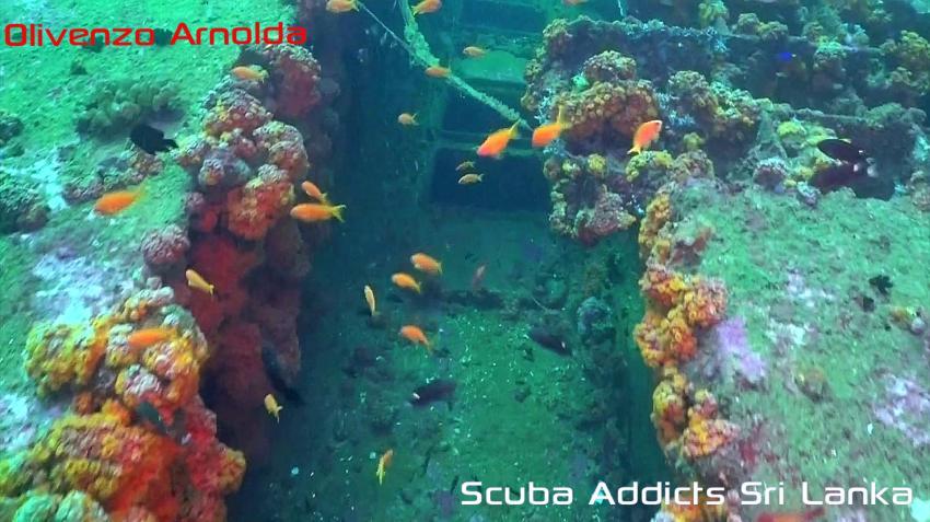 Scuba Addicts, Mount Lavinia, Sri Lanka