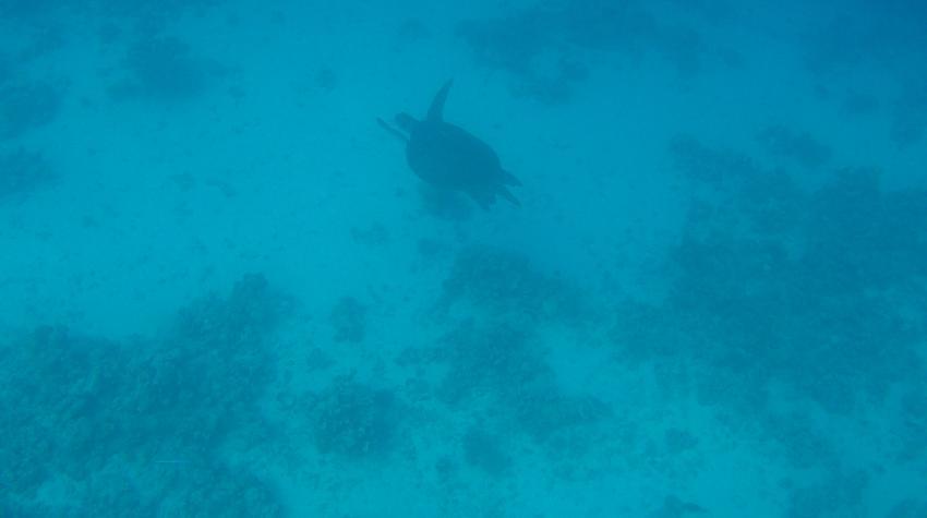 Extra Divers Ghalib, Port Ghalib, Ägypten, El Quseir bis Port Ghalib