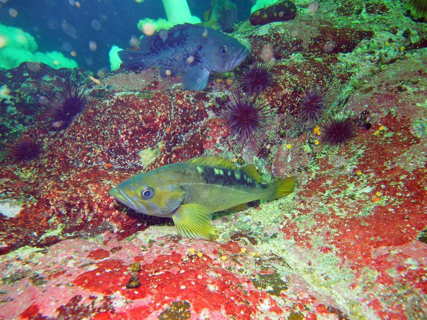 Fische (die Namen haben wir nicht rausgefunden), Rendezvous, Barkley Sound, Kanada