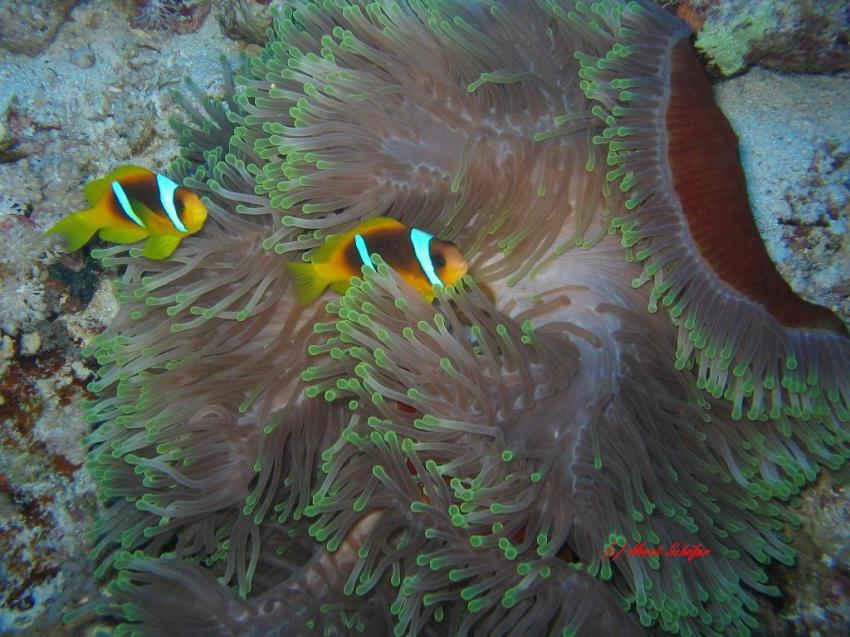 Südtour Daedalus-Rocky Island-Zabargad, Südtour,Ägypten
