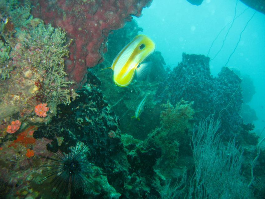 Pattaya - Shark Fin, Pattaya / Inseln,Thailand
