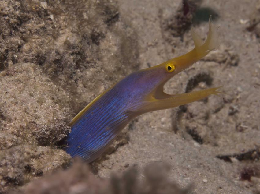 Murex Dive Resort, Banka Island