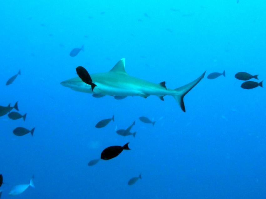 Muss man nicht erklären, Aeolus Diving, Fihalhohi, Malediven