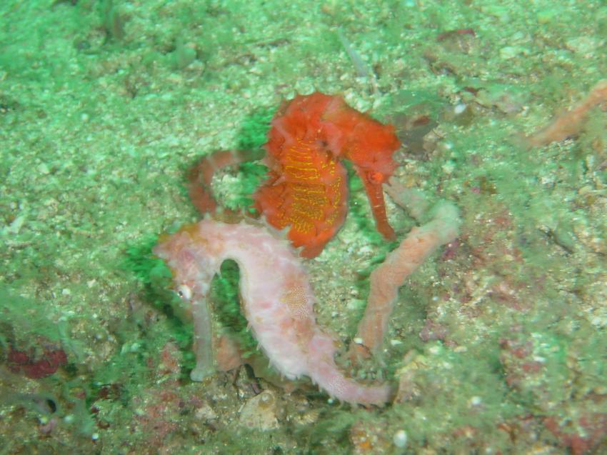 Sabbang, Mindoro, Asia Divers, Sabang Beach,Mindoro,Philippinen