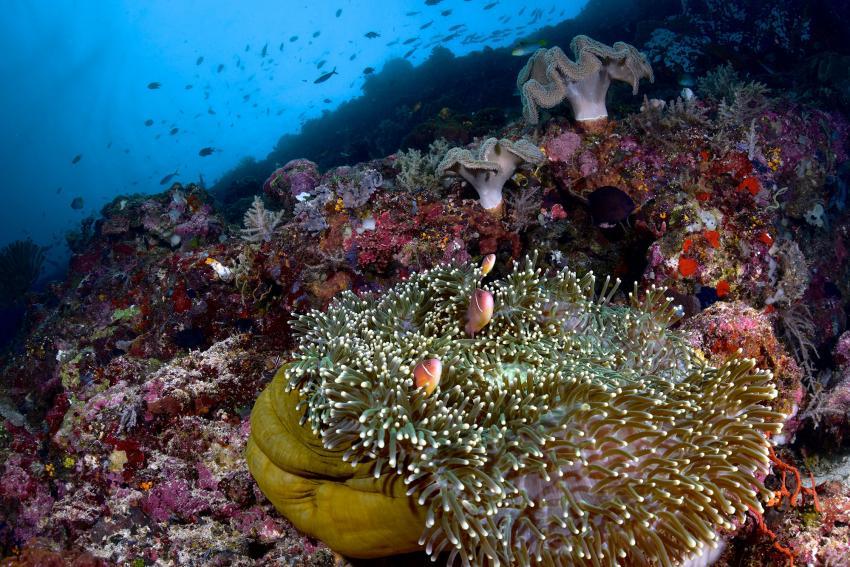 Rabaul Dive Adventures, Papua-Neuguinea