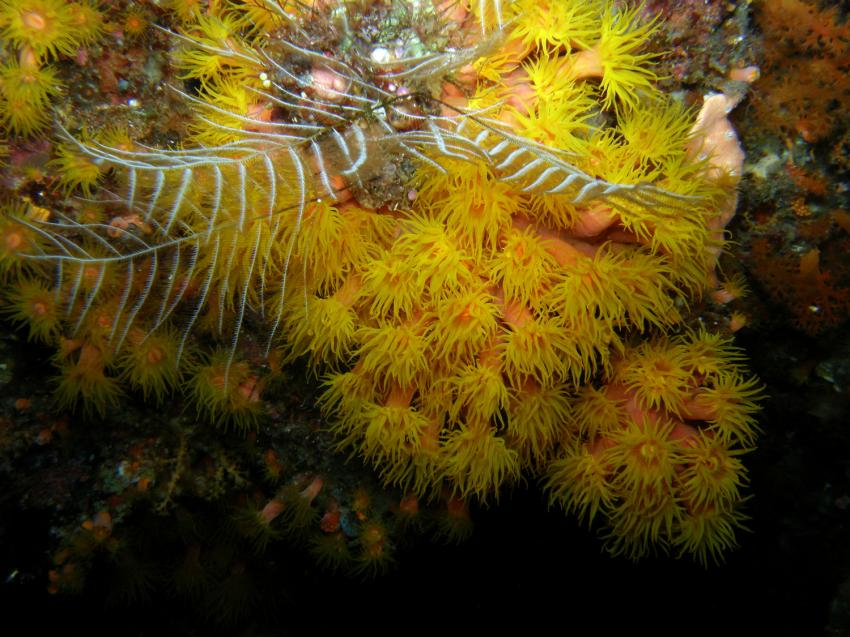 Bilder Tauchurlaub Selayar Dive Resort