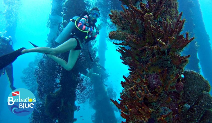 Jetty Diver © Barbados Blue, Barbados Blue Water Sports, Barbados
