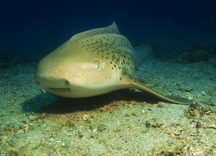 Rund um Koh Doc Mai und Shark Point