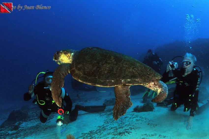 Sal / ScubaCaribe, Insel Sal,St. Maria,Kap Verde