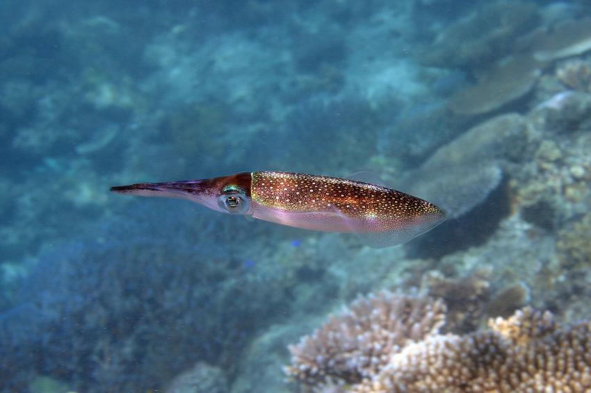 Mamanucas/Modriki, Mamanucas/Modriki,Fidschi,Sepia