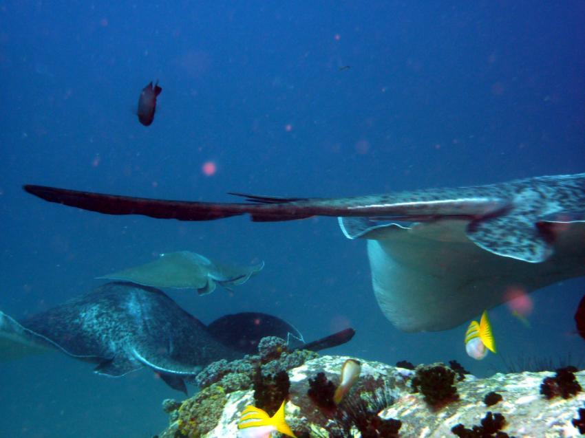 Sharkbank am 12. Nov. 2009, Mahe,Beau Vallon,Shark Bank,Seychellen