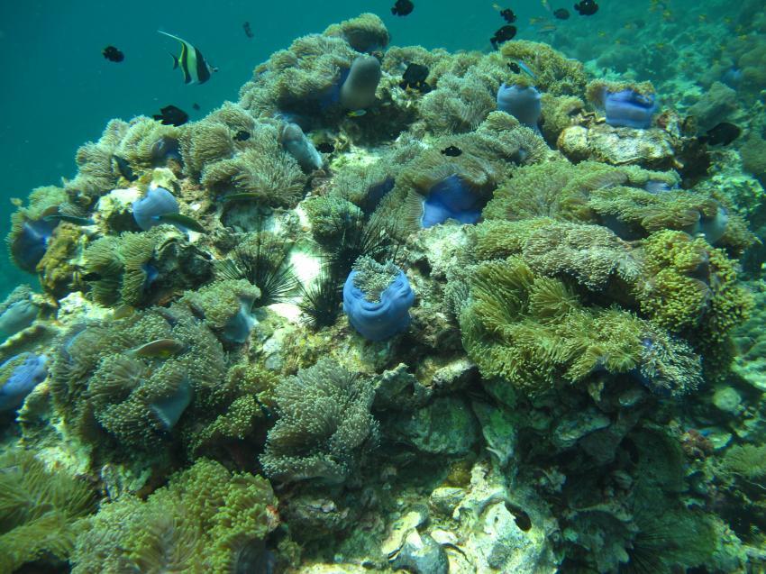 Dream Team Divers - Phuket - Ya Nui