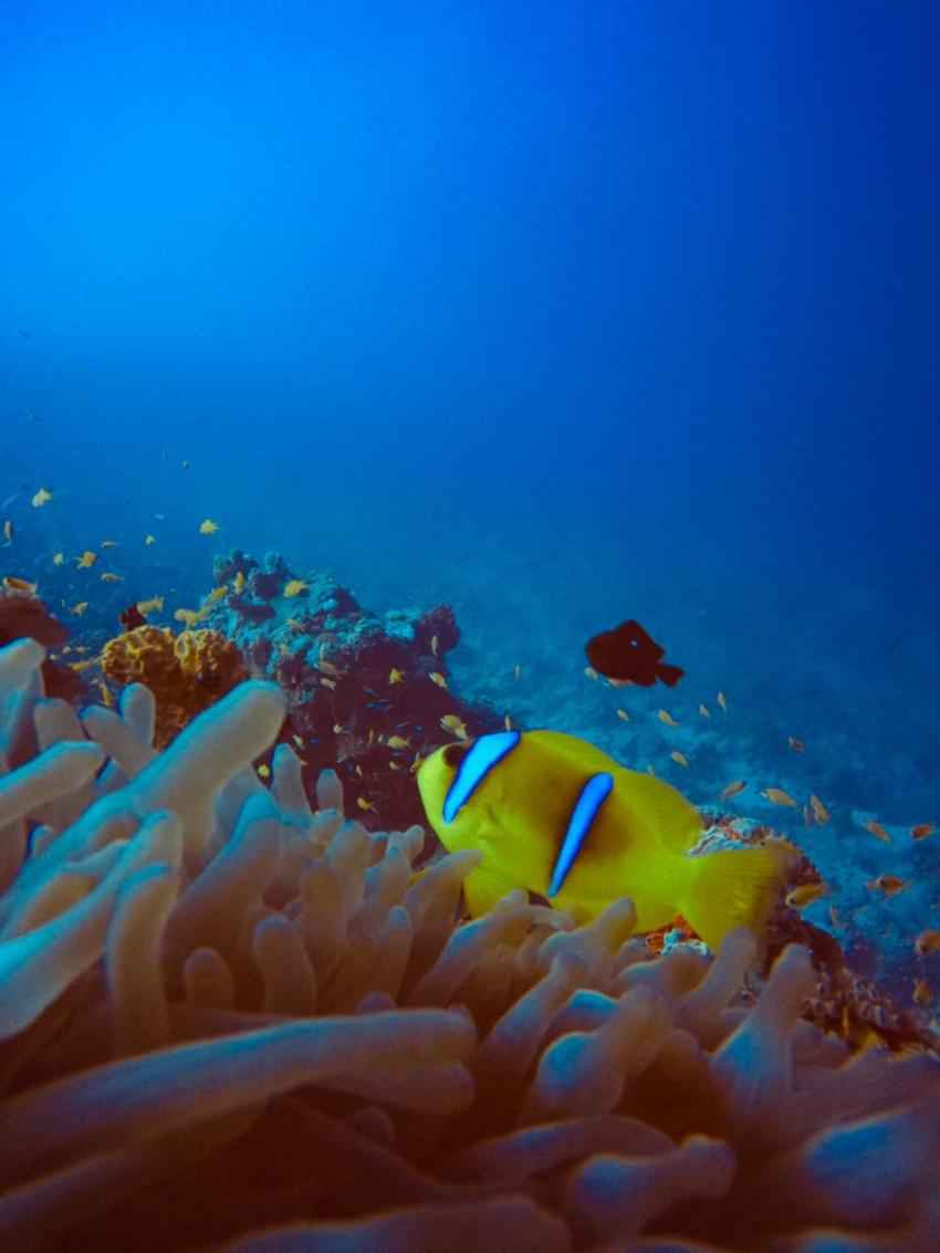 Scuba World Divers SuneoClub Reef Marsa?Hausriff_6, Tauchen Ägypten Marsa Alam Port Ghalib, Scuba World Divers, SuneoClub Reef Marsa, Port Ghalib, Ägypten, El Quseir bis Port Ghalib