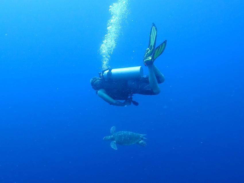 Apo Reef; Schildkröte, Apo Reef, Pandan Island, Sablayan, Philippinen