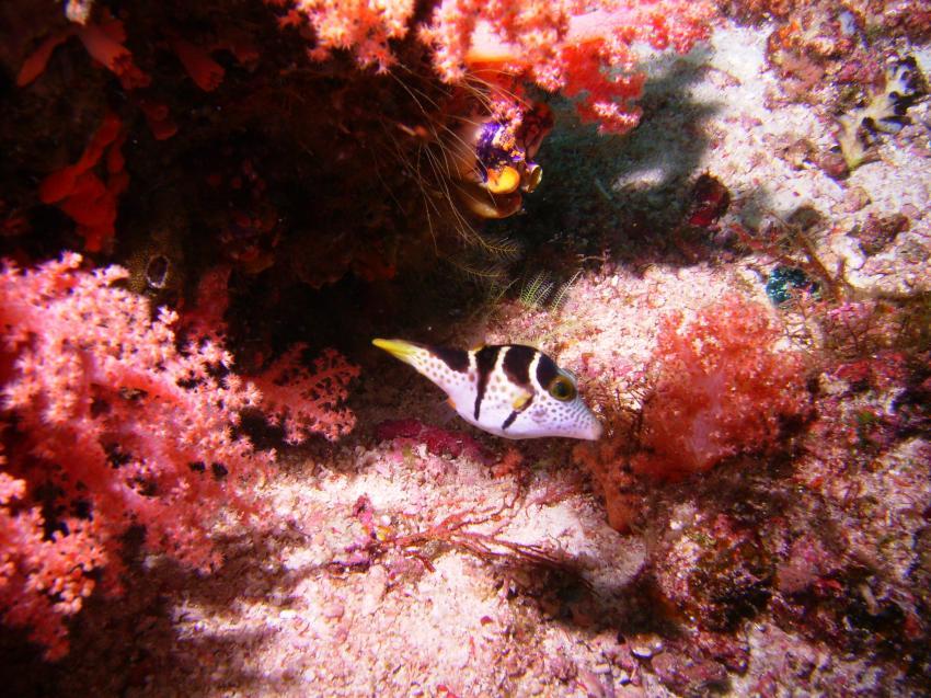 West-Papua Raja Ampat, West-Papua Raja Ampat,Indonesien
