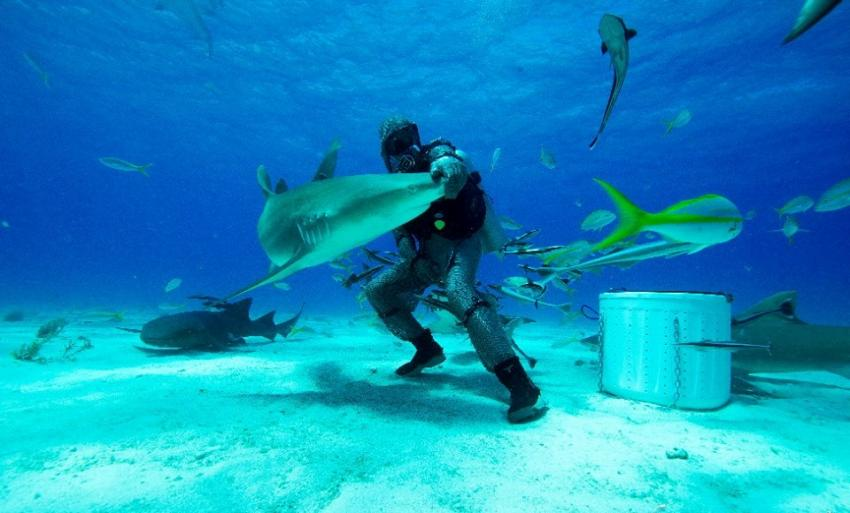 Reef Oasis Viva Bahamas, Grand Bahama, Bahamas
