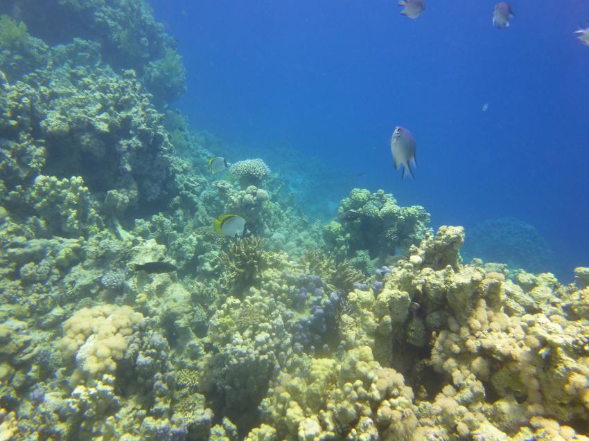 Ras um Sid4, Circle Divers, Badawia Hotel, Ras Um Sid, Sharm El Sheikh, Ägypten, Sinai-Süd bis Nabq