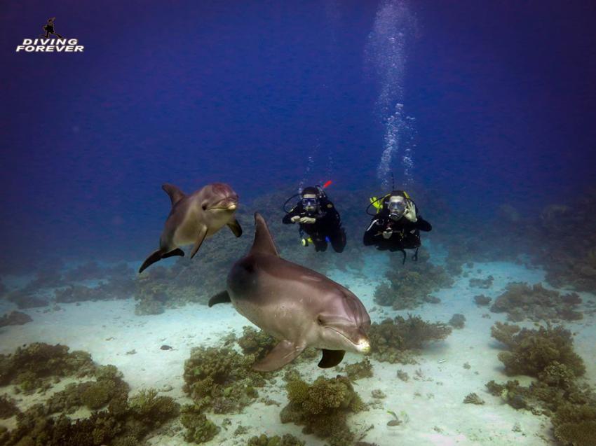 Dolphinhouse Hurghada, Tauchen Hurghada, Tauchschule Hurghada, Deutsche tauchschule hurghada, Diving Forever Hurghada, Ägypten, Hurghada
