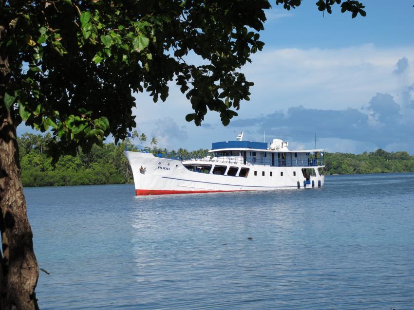 M/V Bilikiki, Salomonen