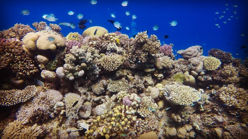 Funnydivers Diving Center, Hurghada, Ägypten, Hurghada