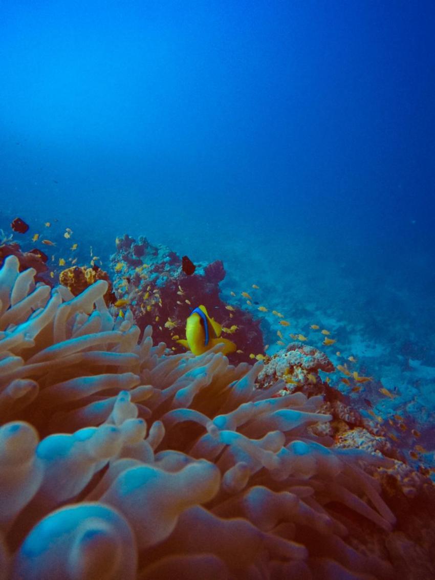 Scuba World Divers SuneoClub Reef Marsa?Hausriff_4, Tauchen Ägypten Marsa Alam Port Ghalib, Scuba World Divers, SuneoClub Reef Marsa, Port Ghalib, Ägypten, El Quseir bis Port Ghalib