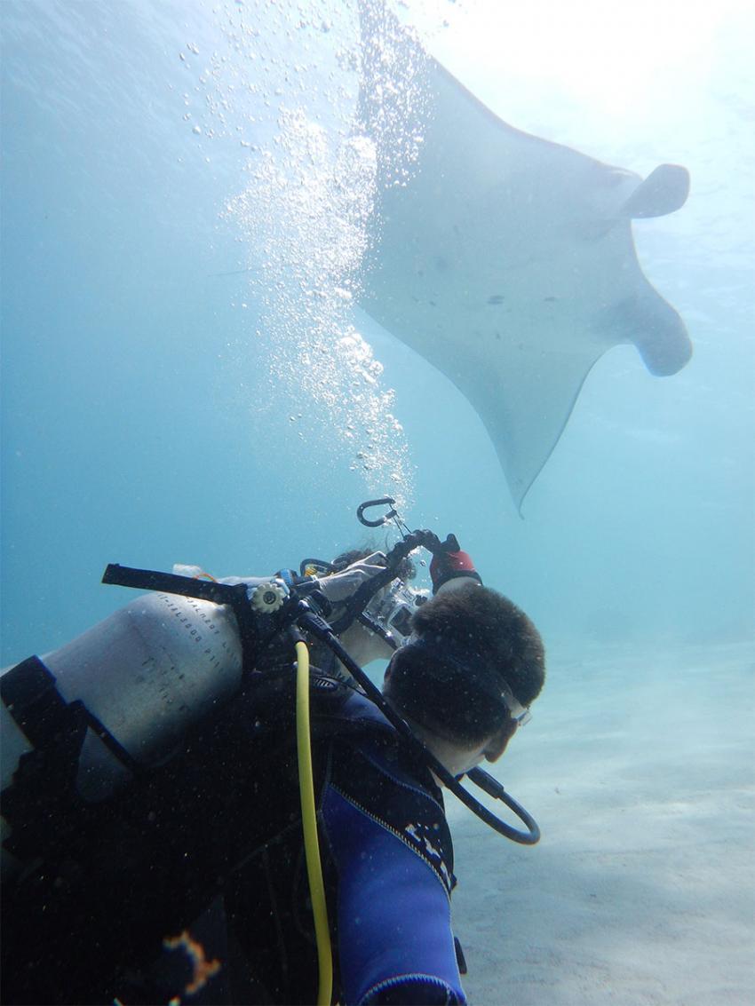 Manta Manta, Manta Rochen Ray, Lagona Divers - Komodo, Indonesien, Allgemein