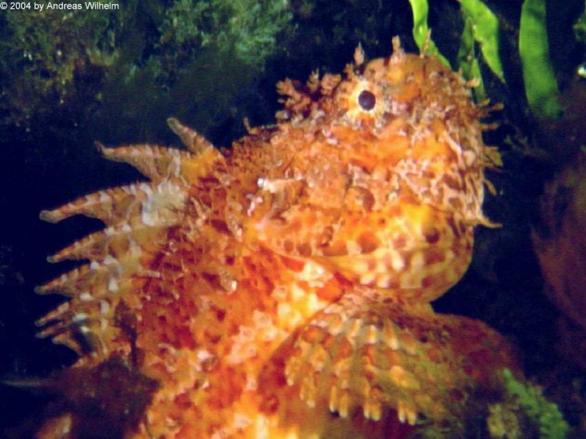Wied iz Zurrieq, West Reef, Nacht, Wied iz Zurrieq,West Reef,Malta