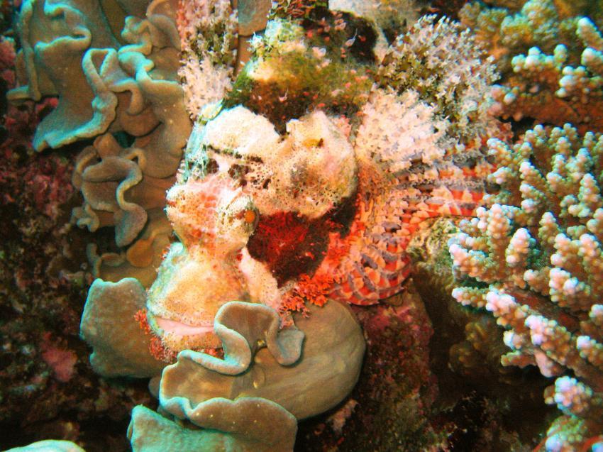 Taucherlebnisse mit den Freedom Divers Safag