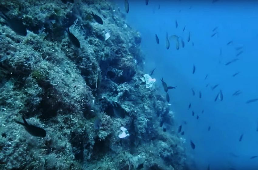 Anchor Reef, Gozo, Malta, Gozo