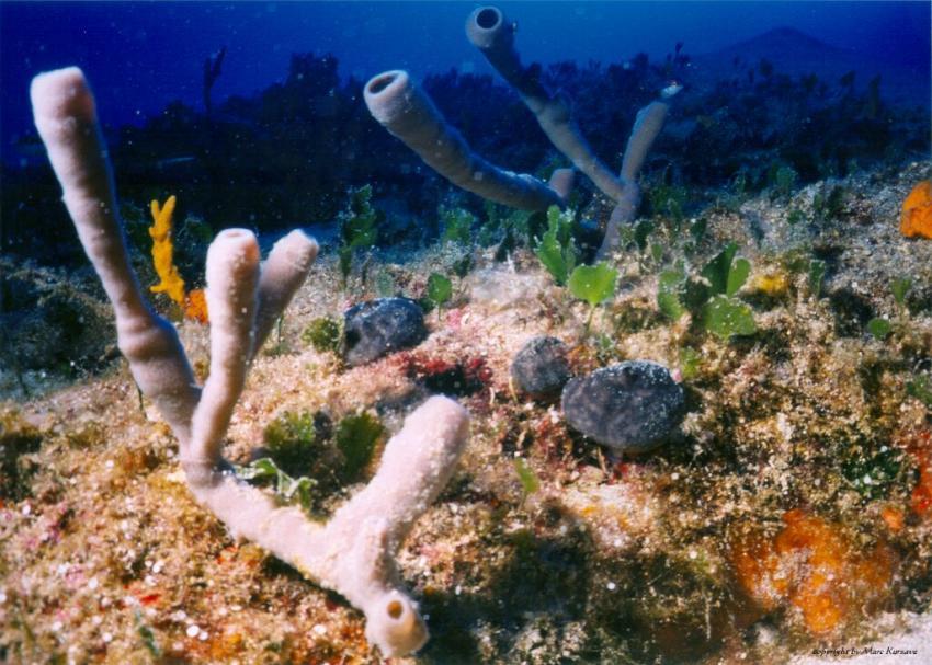 Kas allgemein, Kas,lykische Küste,Türkei,Seegras,korallen