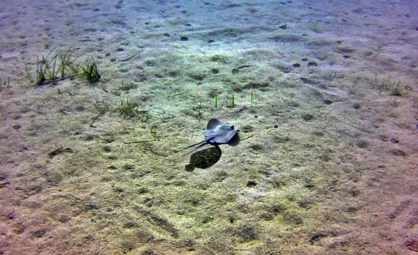 Mgarr ix Xini (by Utina Diving College), Mgarr ix-Xhini, Xewkija / Gozo, Malta, Gozo